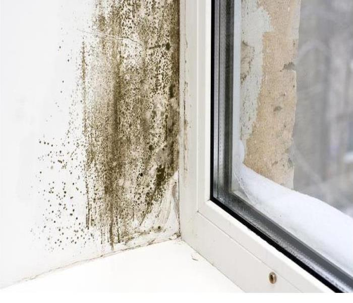 Mold Remediation Watch Out For Areas of Mold Growth!